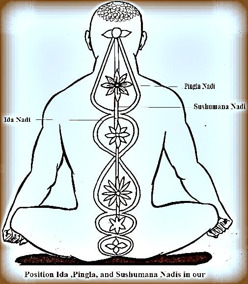 Position of nadis